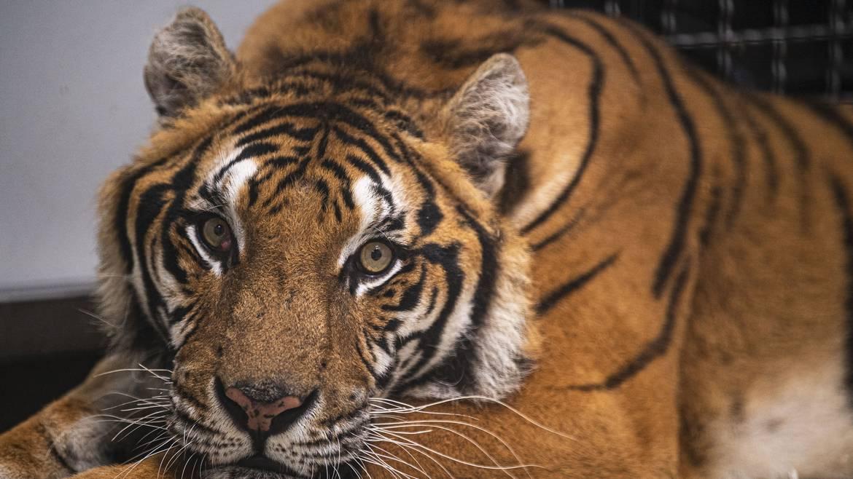 Visite libre du zoo-refuge La Tanière