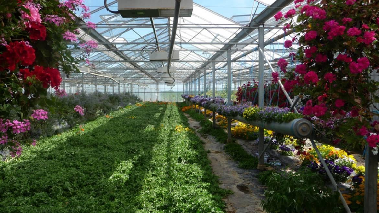 Exploitation dédiée à la culture des fleurs comestibles
